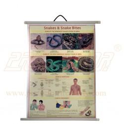 Safety Chart Snakes & Snake Bites